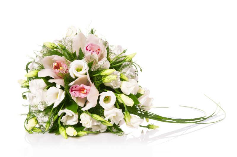 白色的花卉