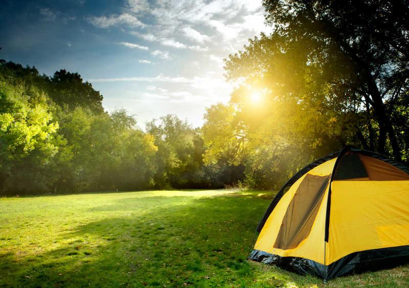 早晨在森林郊游