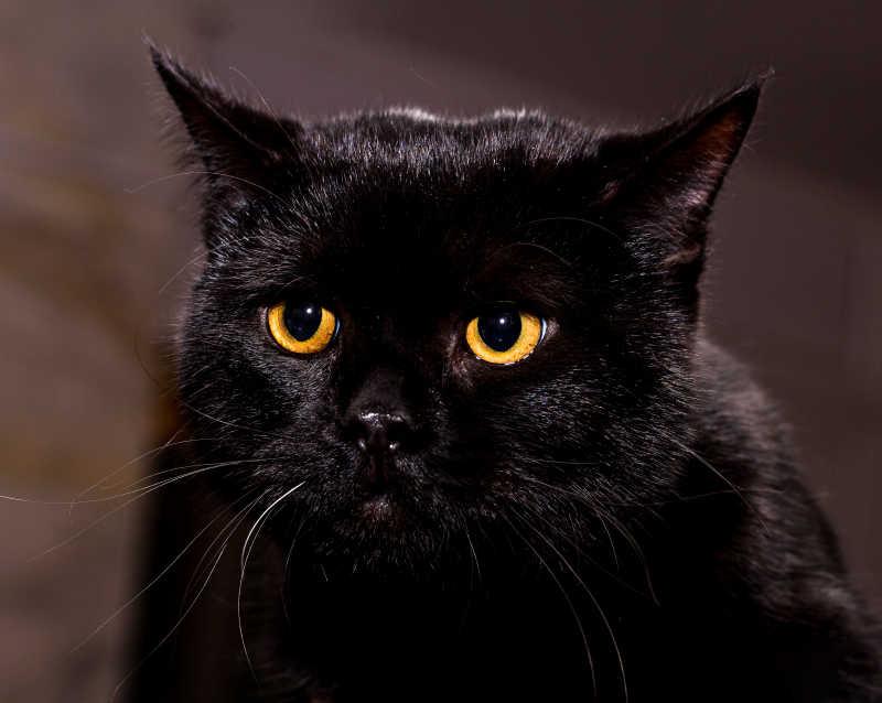 黑色猫咪在凝视着什么