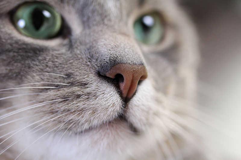 猫咪脸部特写镜头
