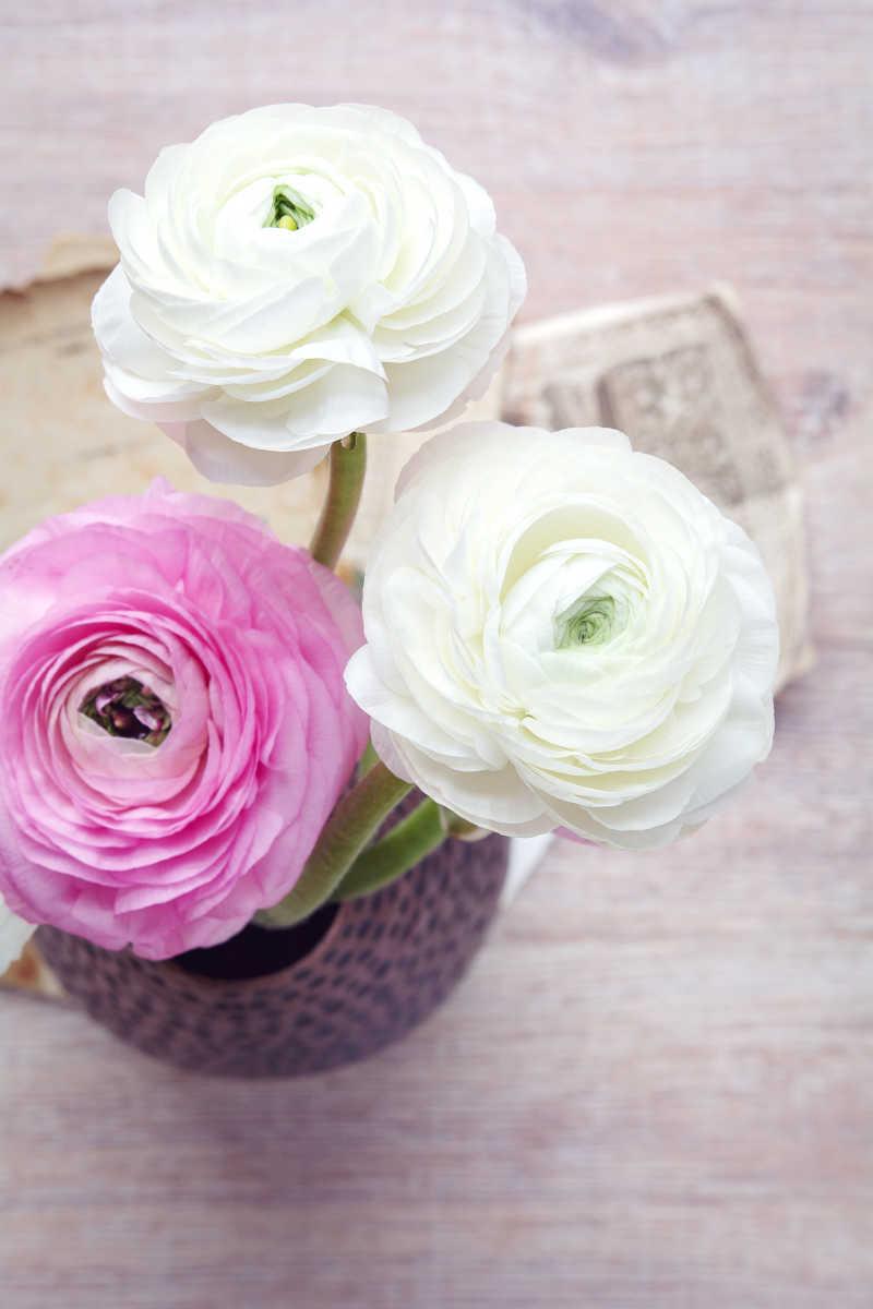 三朵盛开的花朵