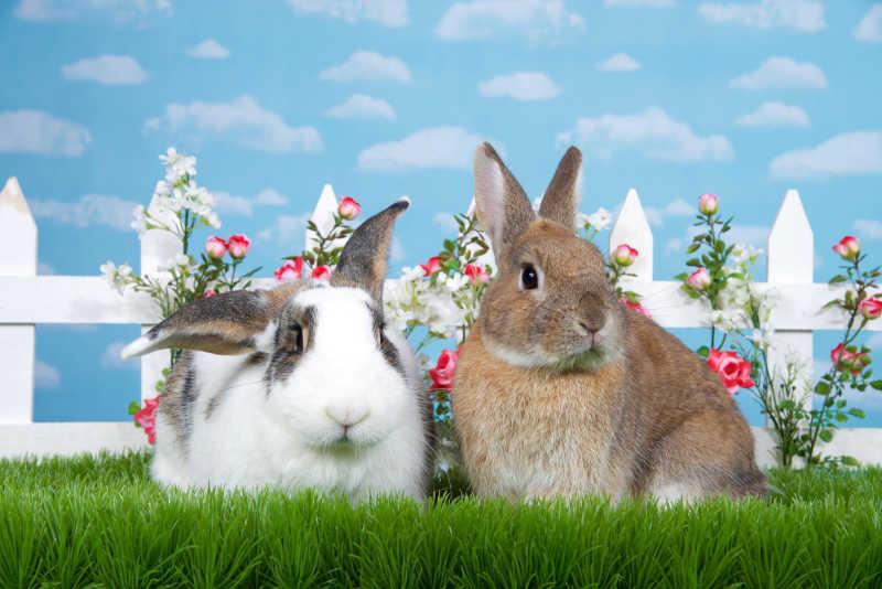 两只可爱的兔子