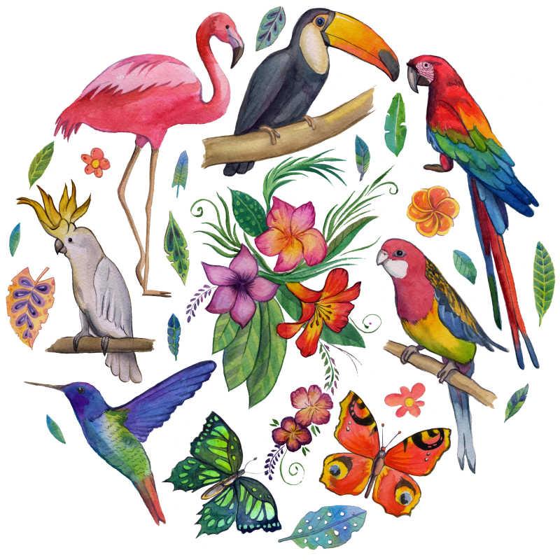 热带花园岛屿动植物插画
