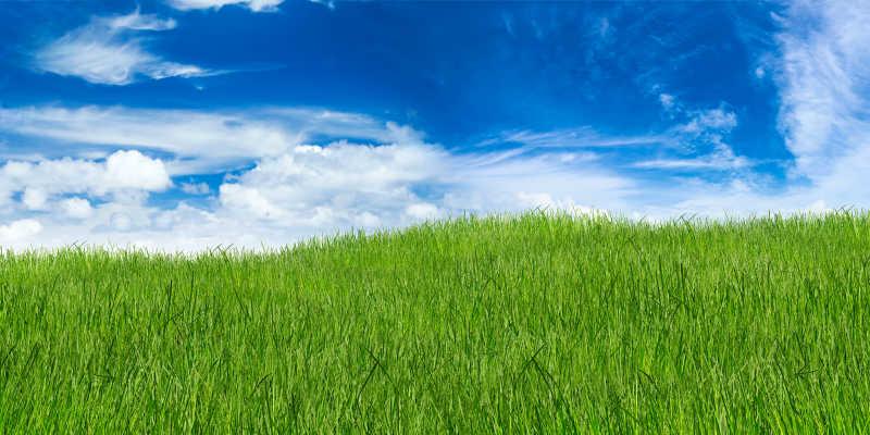 蓝天下的青青草原