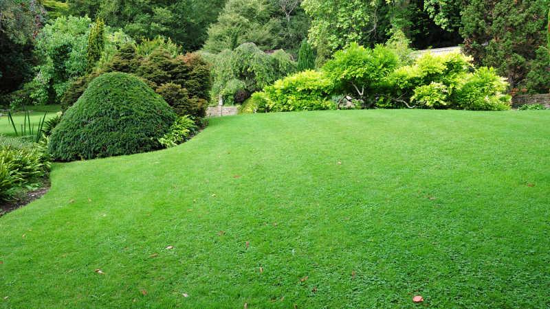 庭院草坪特写