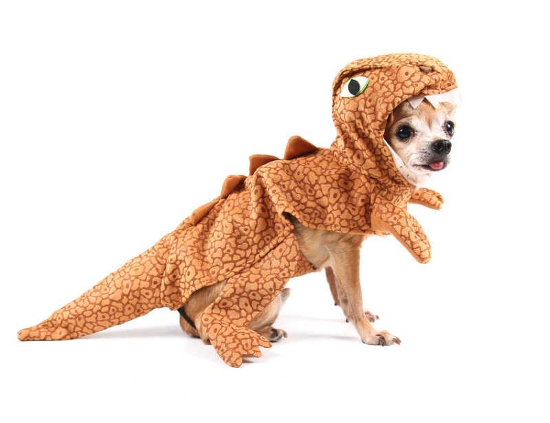 穿着小恐龙衣服的吉娃娃