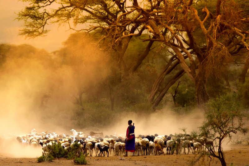 牧羊人赶着一群山羊