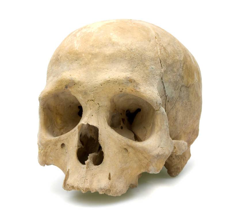 人的头骨模具