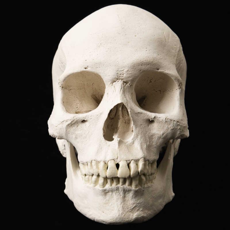 黑色背景下的颅骨模型特写