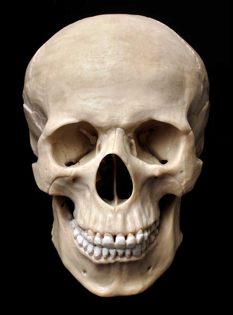 黑色背景下的人类颅骨模型