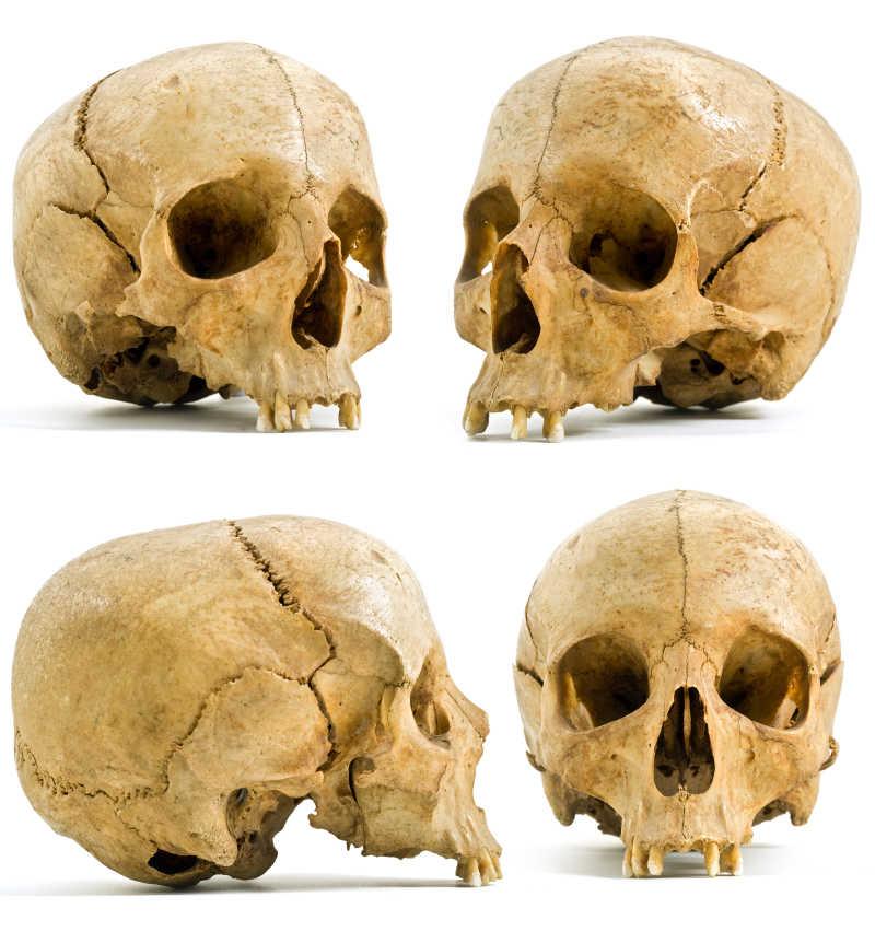 白色背景下的4个人类头骨