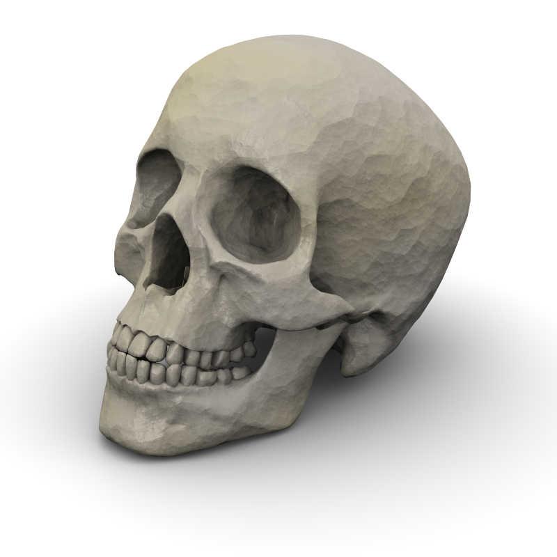 白色背景下的人类头骨模型