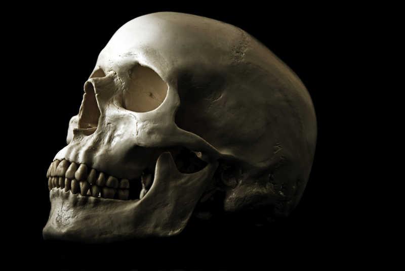 黑色背景下的人类骷髅头模型