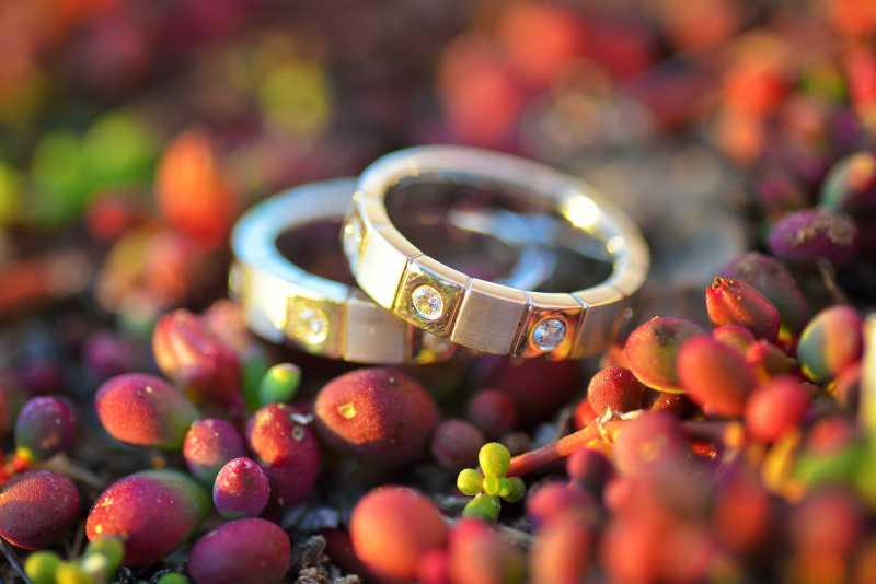 多肉植物上的结婚对戒