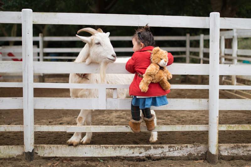 和山羊玩耍的孩子