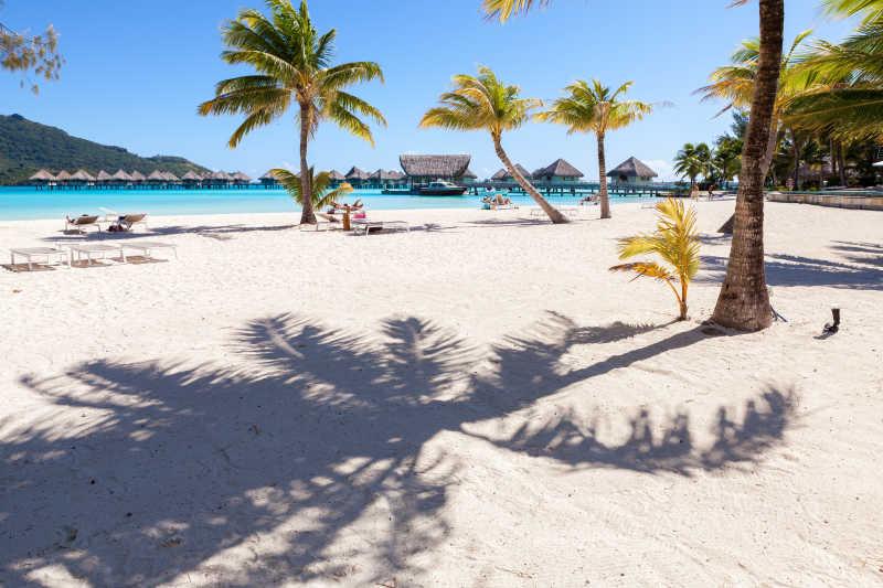 白色沙滩上棕榈树景象
