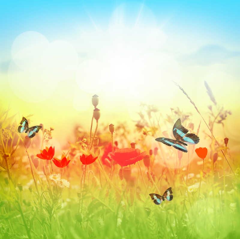 夏季蝴蝶飞舞在草甸中