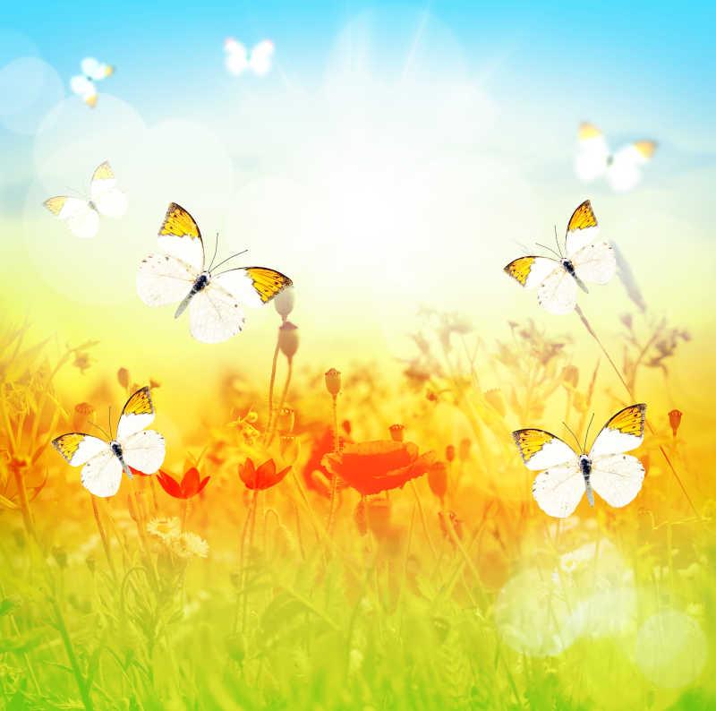 烈日下的蝴蝶和草甸