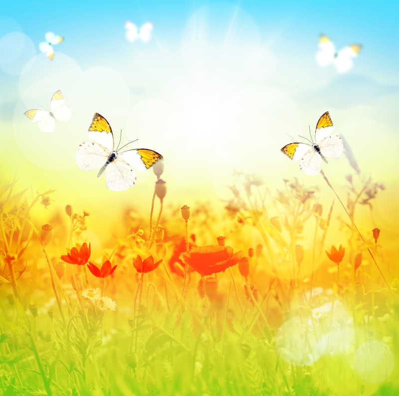 烈日下的蝴蝶肆意飞舞着