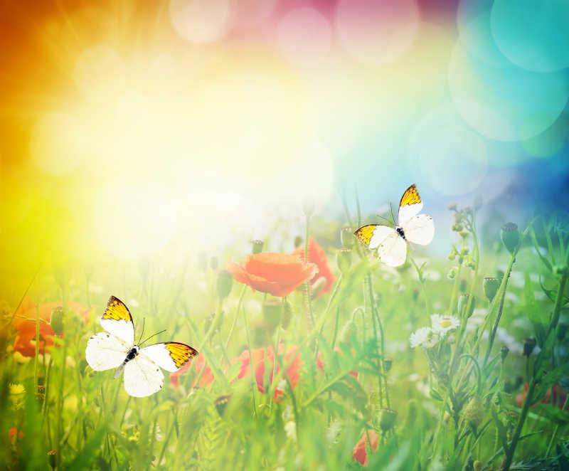 美丽的蝴蝶和草甸风景