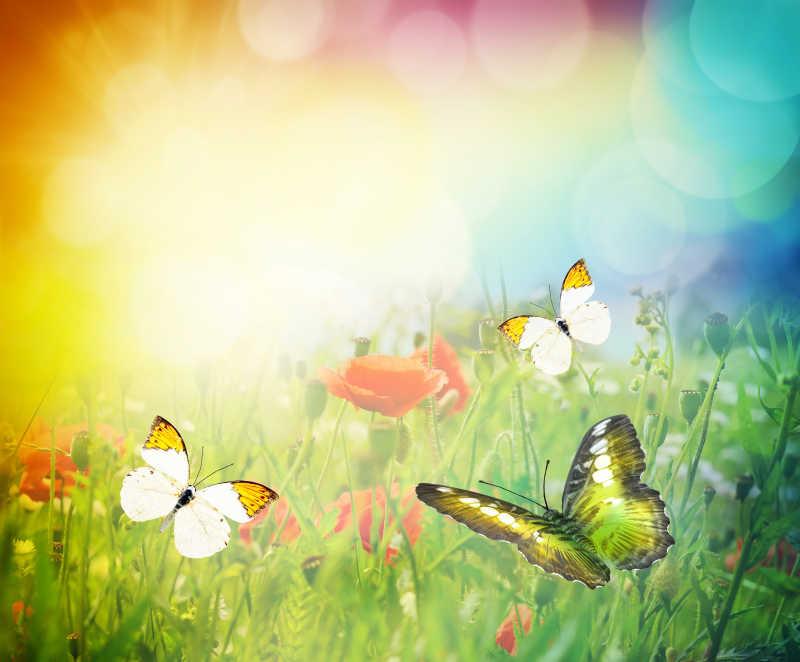美丽的蝴蝶飞舞在草甸中