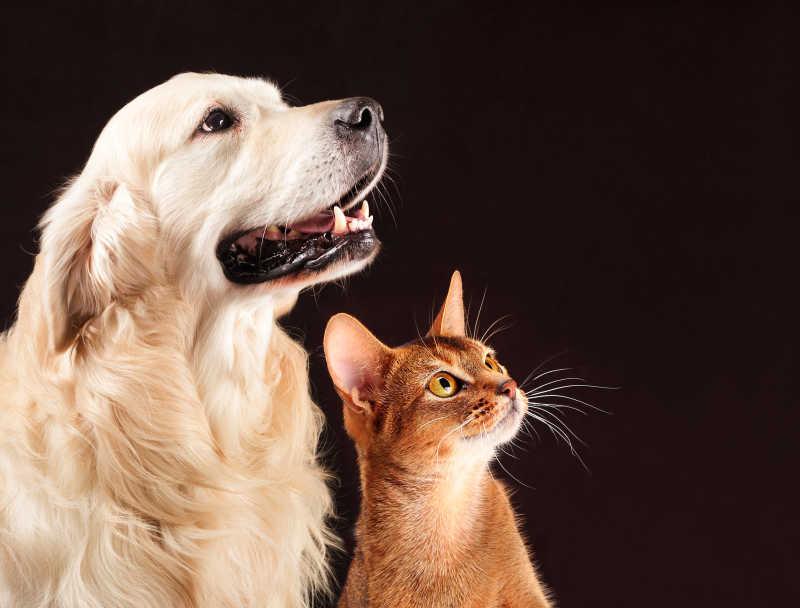 仰望的猫和狗