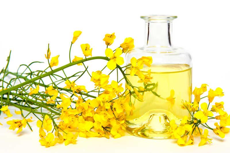 黄色的油菜花和玻璃瓶中的植物油