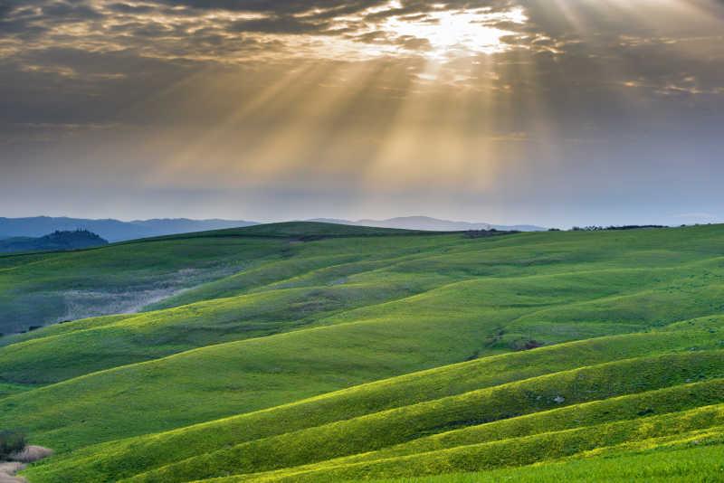 绿色的大草地