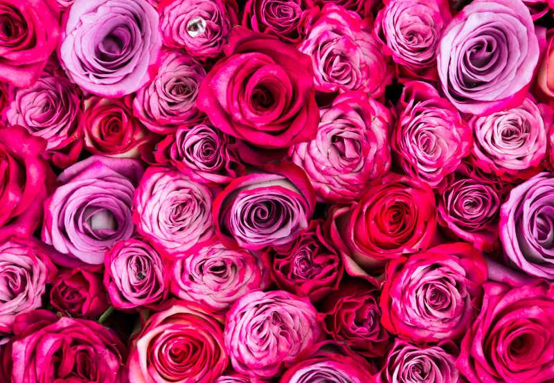 平铺好的红色粉色紫色玫瑰花