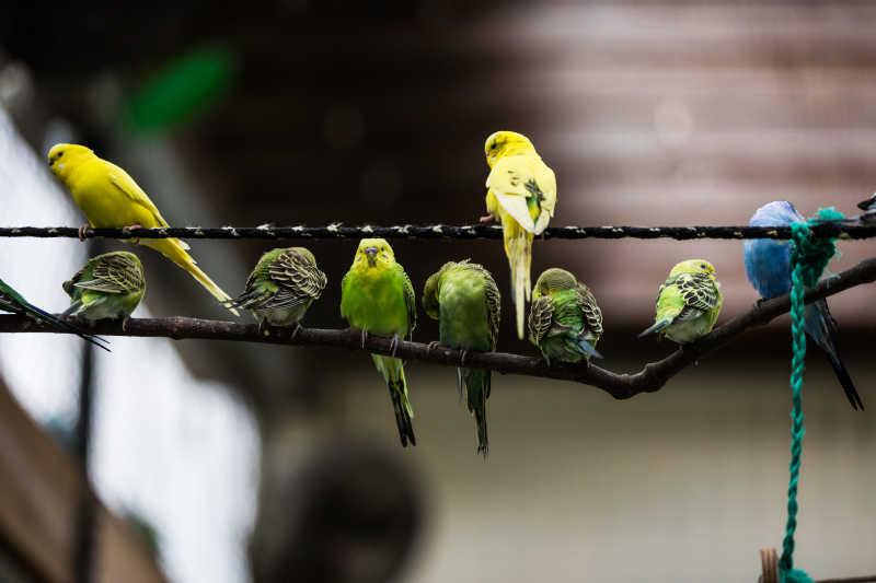 树枝和绳子上的停留的漂亮的鹦鹉
