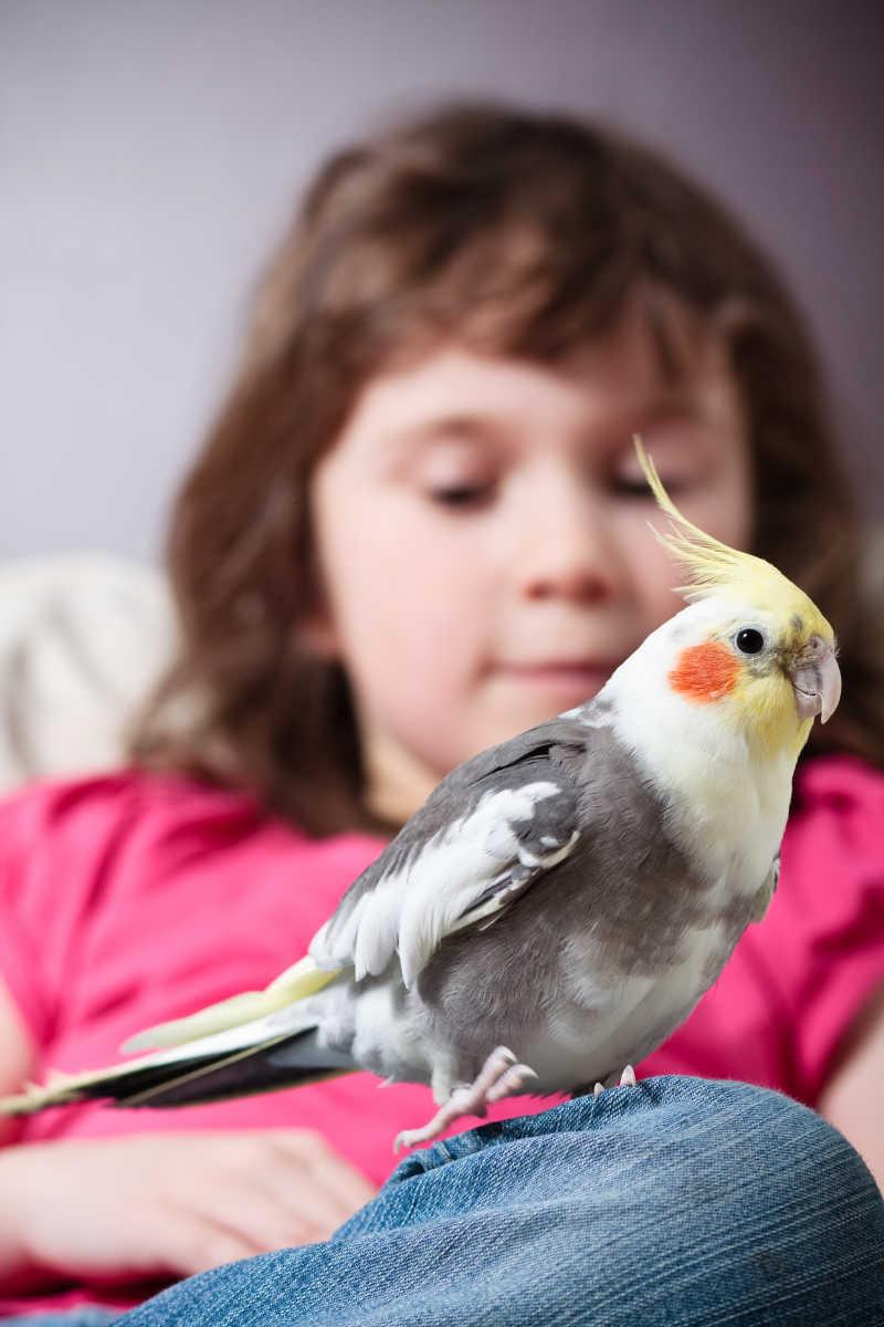 小女孩腿上的鸡尾鹦鹉