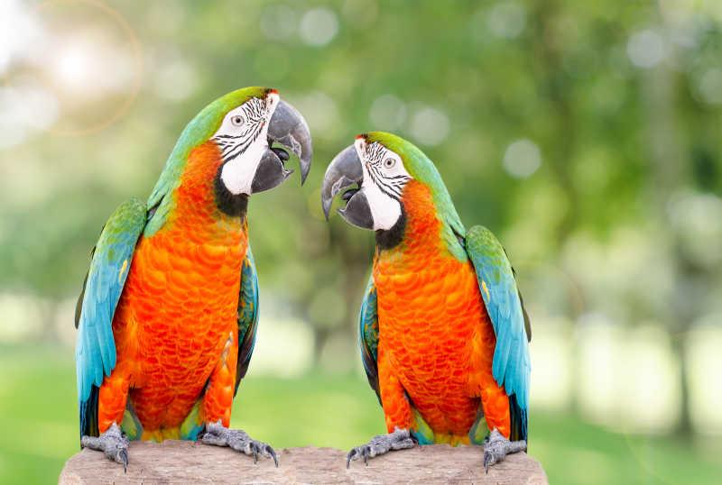 枯木上的两只鹦鹉