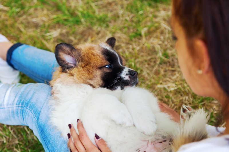 坐在草地里抱着狗狗的女孩