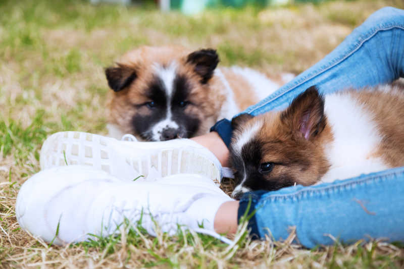 草地脚部的两只幼犬