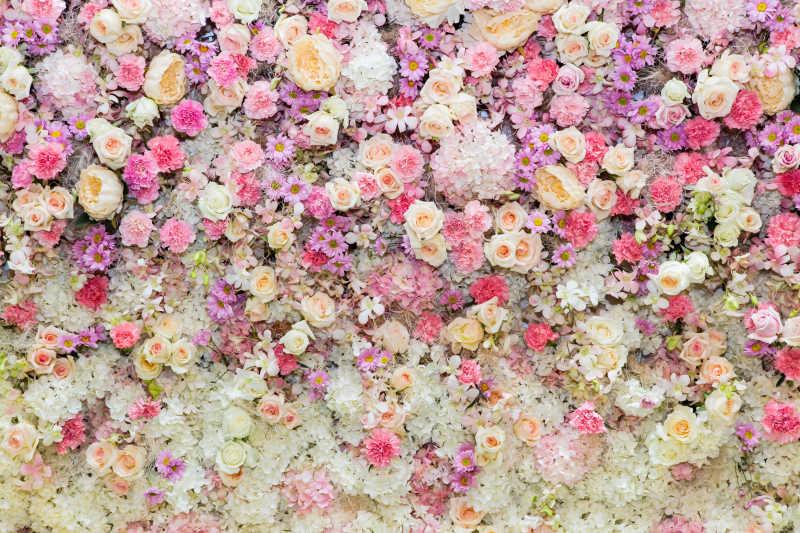 五颜六色的花朵特写