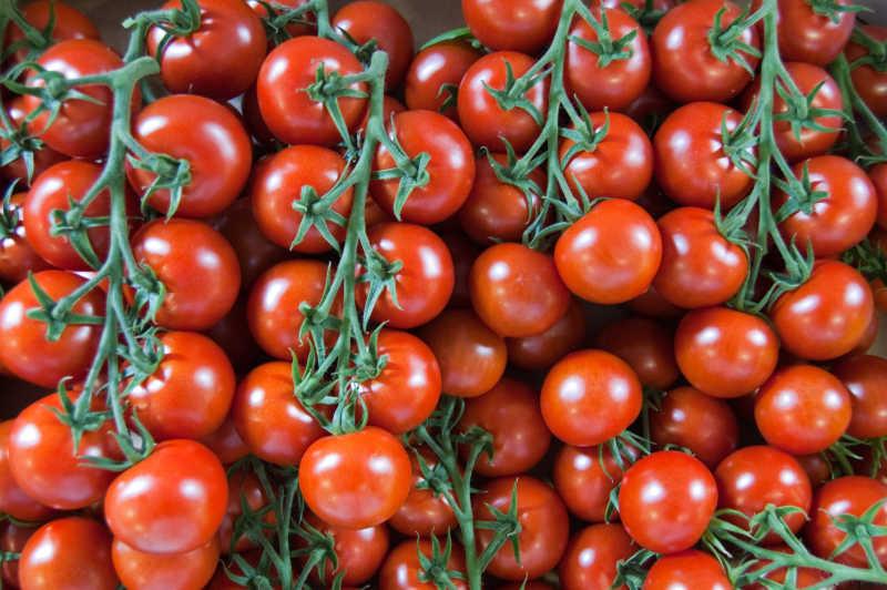 藤上的西红柿