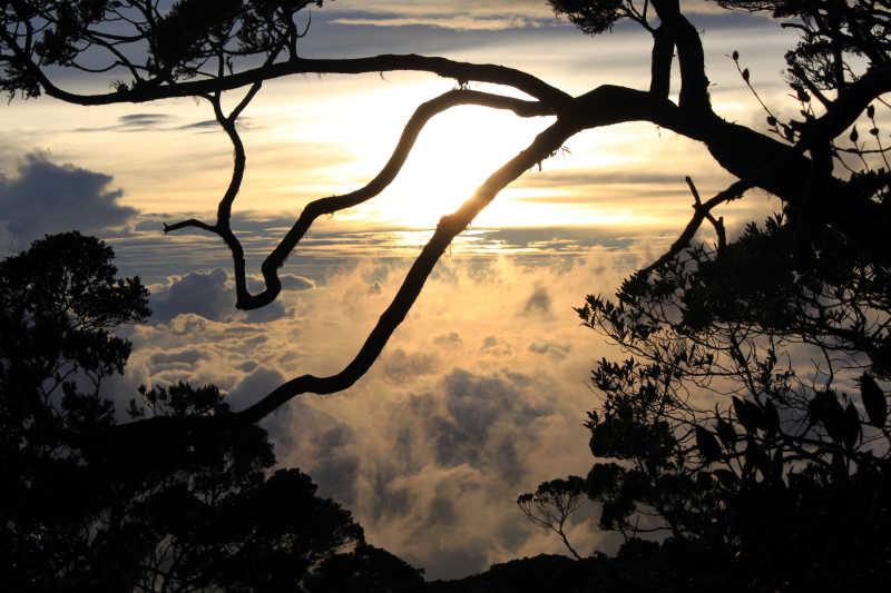 日落下的马来西亚丛林