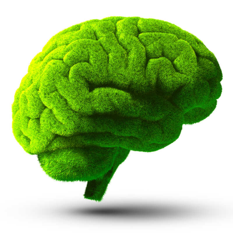 白色背景下的被绿草覆盖着的人类大脑表达的环保概念