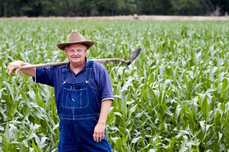 站在玉米田里的老农