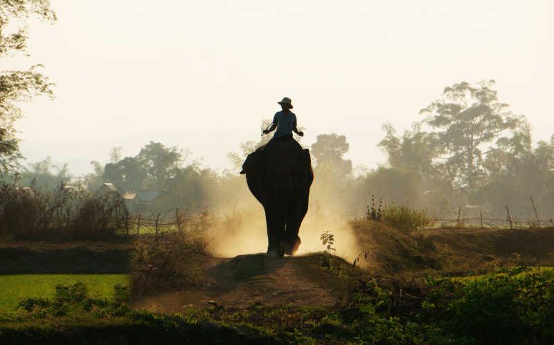 象夫骑着大象在道路上行走