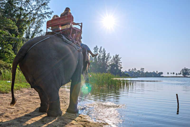 象夫骑着大象在河边行走