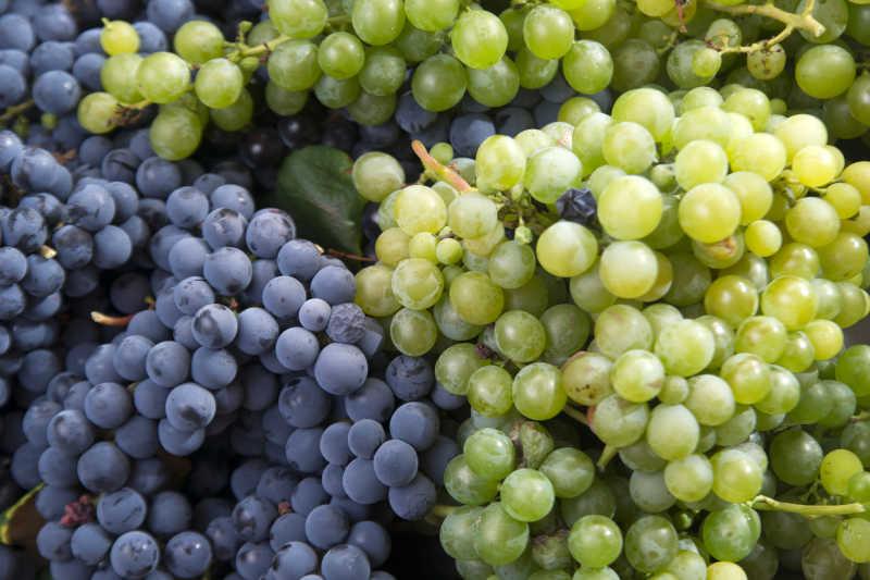 收获的葡萄