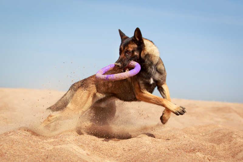 在沙滩上玩耍的狗