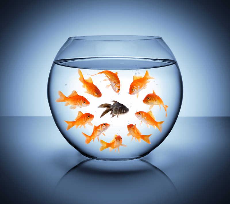 蓝色背景下鱼缸里的鱼