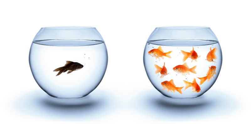 孤独中的鱼