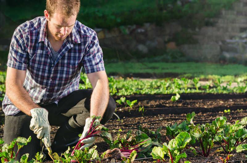 拿铲子的在农田干活的男人