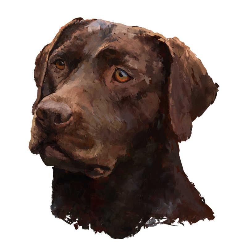 油画拉布拉多犬