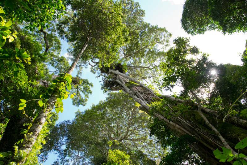 澳大利亚热带雨林