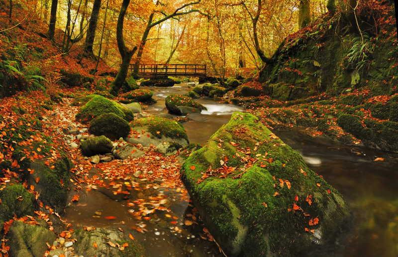 秋季森林风景