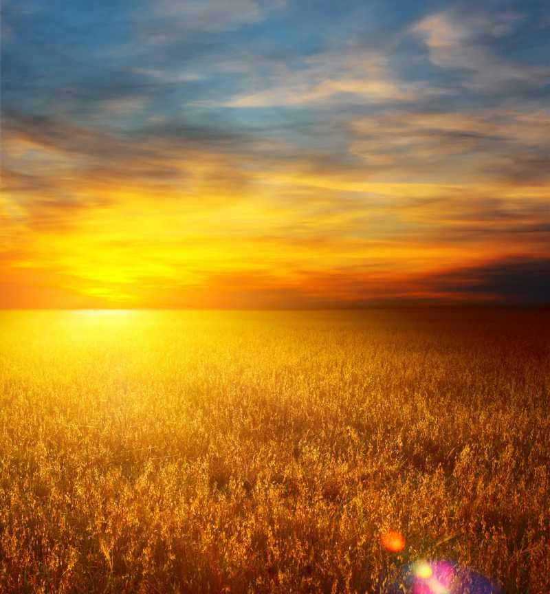 秋季晚霞下的麦田风景